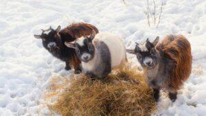 5 Ways to Prepare a Farm for Winter